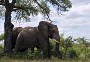 Braconnage et tourisme: le Mozambique veut rattraper son retard