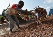 La Côte d'Ivoire va investir près d'un milliard d'euros pour réhabiliter sa forêt détruite