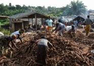 """En Afrique de l'Ouest, l'""""Ebola du manioc"""" menace la sécurité alimentaire"""