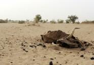 Sahel: l'insécurité aggrave la crise alimentaire