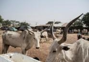 Nigeria: 26 morts dans des attaques criminelles dans le nord