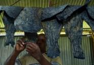 Au Kenya, les restes de poisson donnent des objets de mode en cuir