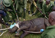 Kenya: un neuvième rhinocéros mort après avoir été déplacé