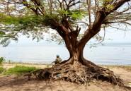 Ouganda: 35 pêcheurs congolais condamnés