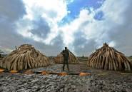 Kenya: acquittement en appel d'un important trafiquant d'ivoire présumé