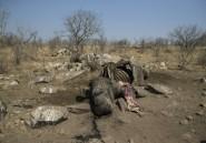 En Afrique du Sud, la guerre totale contre le braconnage