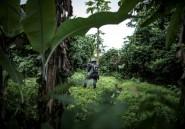 Présidentielle/Cameroun: des villageois privés de vote par crainte d'attaques