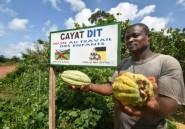 La Côte d'Ivoire veut booster son commerce équitable