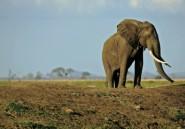 Tanzanie: deux sociétés égyptiennes pour construire un barrage controversé