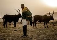 Beaucoup de violences, un peu d'espoir pour les éleveurs et fermiers du Nigeria