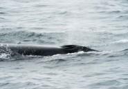 Avalé par une baleine, un plongeur sud-africain échappe