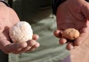 """La cueillette des truffes du désert en Libye, un métier et """"une passion"""""""