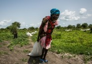 Les chocs climatiques et les conflits, premières causes des crises alimentaires en 2019