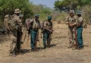 Un soldat britannique tué par un éléphant au Malawi lors d'une opération antibraconnage
