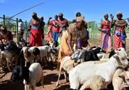Kenya: pour trouver la pluie, des éleveurs se fient plus
