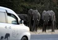 Le Zimbabwe veut pouvoir vendre ses défenses d'éléphants et cornes de rhinocéros