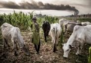 Nigeria: au moins 37 morts dans des attaques dans le nord-ouest