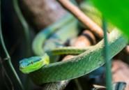 Un serpent met des parlementaires nigérians en fuite