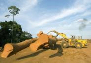 Gabon: le bois précieux