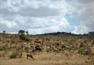 Kenya: 12 personnes tuées par des voleurs de bétail dans le Nord