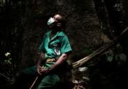 D'anciens chasseurs pygmées tentent de sauver les derniers éléphants de Centrafrique