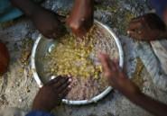 Les crises alimentaires risquent de se multiplier dans le monde, selon l'ONU et l'UE