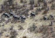 Une centaine d'éléphants victimes de la sécheresse au Botswana