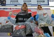 Le commerce illicite des pangolins toujours en hausse (ONG)