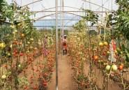 """La Namibie veut mettre fin au """"statu quo"""" des fermes aux mains des Blancs"""