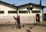 En Guinée-Bissau, une mystérieuse hécatombe de vautours
