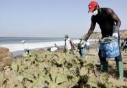 A Dakar, des citoyens nettoient une plage envahie de déchets médicaux dangereux