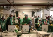 En Egypte, la pandémie enfonce les travailleurs pauvres dans la précarité