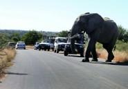 En Afrique du Sud, le tourisme des safaris fait le dos rond face