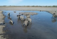 Botswana: enquête suite