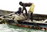 Au Sénégal, d'anciens mangeurs de tortues veillent désormais