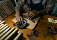 "Le grand pari des cigares ""made in Zimbabwe"""