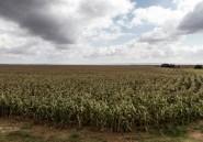 Afrique du Sud: des terres louées