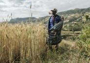 Ethiopie: le conflit au Tigré menace de s'étendre vers le sud