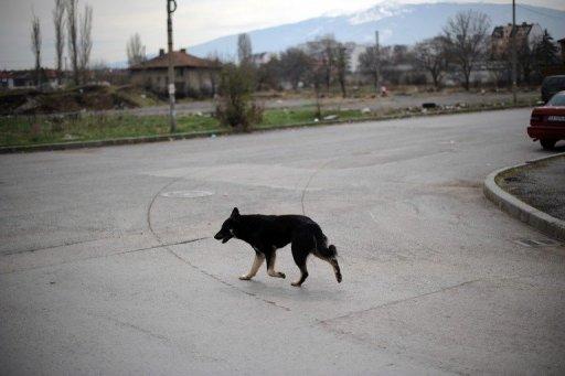 Un chien AFP/Archives Dimitar Dilkoff