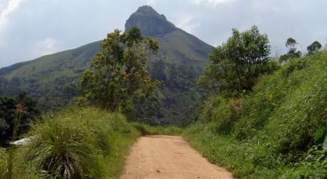Deforestation in Mbengwi, by treesftf via Flickr CC