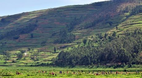 rwanda GV4_lo, by CIAT International Center for Tropical Agriculture via Flickr CC