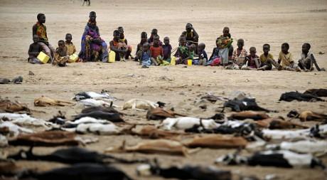 Abattre les chèvres afin qu'elles ne meurent de faim, en 2009, à Lopongo. Tous droits réservés Roger Job
