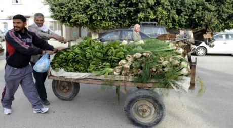 Vendeur ambulant en Tunisie le 17 décembre 2011. AFP/FETHI BELAID