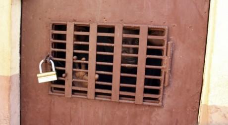 Prisonniers en Afrique de l'ouest le 4 janvier 2010. Reuters.
