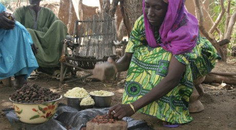 Une femme burkinabé fabrique du beurre de karité, arbre sur lequel vivent les chenilles © TREEAID/Flickr