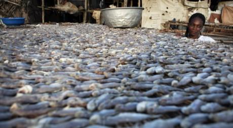 Marché au poisson d'Akpakba, à Cotonou. REUTERS/Finbarr O'Reilly