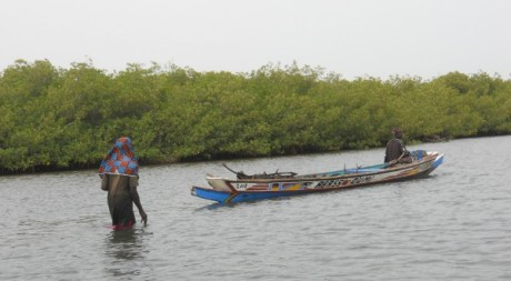 Mangrove à Foundiougne au Sénégal © Lala Ndiaye