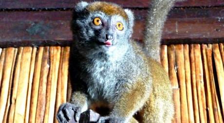 Madagascar, septembre 2010 © A.Ratsimiala