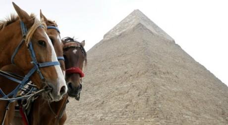 Chevaux au bord des pyramides de Giza en Egypte le 9 février 2011. Reuters/Mohamed Abd El Ghany
