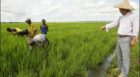 Un ingénieur apprenant la culture du riz à des paysans. Le 28 août 2002. AFP/Issouf Sanogo